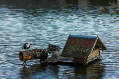 Ducks in lake. In Czech Republic Royalty Free Stock Photography