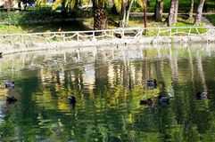 Ducks on the lake of the garden Royalty Free Stock Image