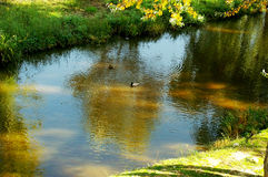 Ducks in the lake of the garden park Infante Don Pedro, Aveiro. Portugal Royalty Free Stock Image