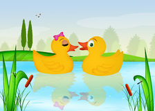 Ducks in the lake. Illustration of ducks in the lake Royalty Free Stock Images