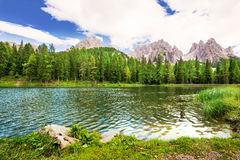 Ducks on lake Lago Antorno with the view to Dolomites, Italy. Stock Image