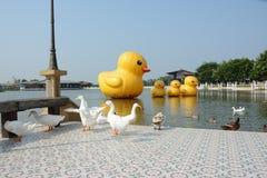 Ducks in the lake Stock Image
