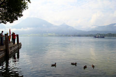 The ducks on the lake Wolfgangsee near to mountains in the cloudy weather. Stock Photography