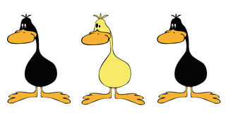 Ducks line up. Royalty Free Stock Photos