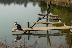 Ducks on a log in the sun Stock Photos