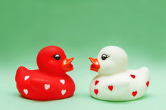 Ducks In Love Royalty Free Stock Photography