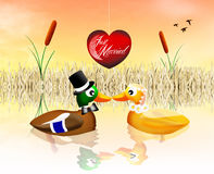 Ducks in love Royalty Free Stock Image