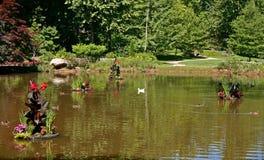 Ducks & Muddy Pond stock photos