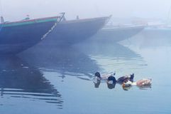 Ducks near boats on sacred river Ganges at cold foggy winter morning Stock Images