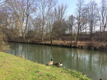 Ducks. Near a river in spring Royalty Free Stock Photo
