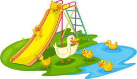 Ducks in a park. IIllustration of a family of ducks at the park Stock Images