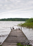 Ducks on Pier Royalty Free Stock Photography