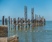 Ducks And Pilings Royalty Free Stock Photos