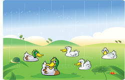Ducks playing in the rain. Illustration Royalty Free Stock Photography