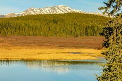 Ducks on the pond below the mountains. Clearwater County, Alberta, Canada Royalty Free Stock Photo
