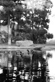 Ducks in a Pond. A group of birds enjoying their bath in a pond at a local park in Santa Ana Califorina Royalty Free Stock Images
