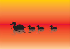 Ducks on a pond illustration. Vetor Stock Photography
