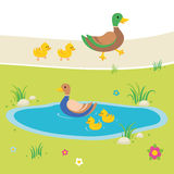 Ducks in pond illustration Royalty Free Stock Images