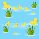 Ducks in Pond Seamless Pattern. A seamless pattern with ducks and ducklings swimming in a pond. Useful also as design element for texture, pattern or gift Royalty Free Stock Image