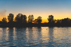 Ducks on a pond at sunset. A flock of ducks gathers on a pond reflecting the last golden light of day stock photos
