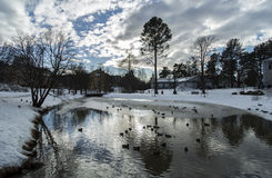 Ducks in Pond in Winter Stock Image