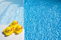 Ducks by pool. Three yellow ducks on the poolside Royalty Free Stock Photo