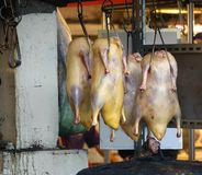 Ducks Ready For Roasting Stock Photography