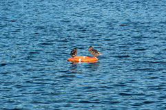 Ducks resting on the lifeline. On the lake Stock Photo