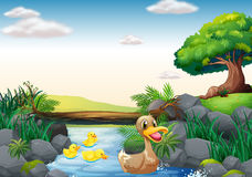 Ducks and river. Illustration of ducks swimming in the river Royalty Free Stock Photos
