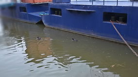 Ducks on the river stock video