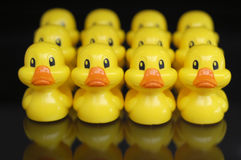 Ducks in a Row. Three rows of brightly colored toy ducks sit on a black reflective surface.  You can see the reflection of the yellow ducks in the surface Royalty Free Stock Images