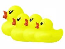 Ducks in a row Stock Photos