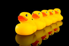 Ducks in a row. A row of yellow ducks on a black background with reflection in black table. Concept of following the leader or lack of individuality or stock photos