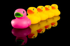 Ducks in a row Stock Photo