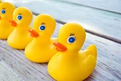 Ducks In A Row Stock Photo