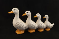 Ducks In A Row. These ducks are a great example of organization as they march in a row Royalty Free Stock Photography