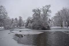 Frozen lake in Jephson Gardens, Leamington Spa, UK - 10 december 2017. The ducks are searching for food on the frozen lake, photo taken in a snowy day of winter Royalty Free Stock Photo