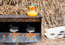 Ducks on a shooting range Royalty Free Stock Image