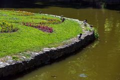Ducks sit on the shore of a pond fortified with stones. Ducks sit on the shore of a pond fortified with stones with a flower bed of blooming flowers and green stock images
