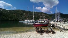 Ducks in Sivota bay Stock Photo