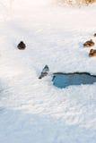 Ducks on snow Royalty Free Stock Image