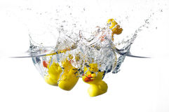 Ducks splash. Rubber ducks splashing in the water Stock Photo