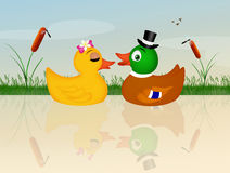Ducks spouses Royalty Free Stock Photo