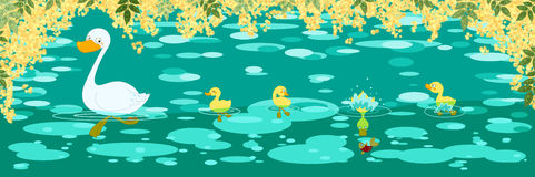 Ducks spring banner. Digital illustrated banner about a family of duck during spring swimming lesson Stock Photography