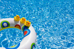 Ducks in Summer Stock Image