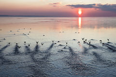 Ducks at sunset Royalty Free Stock Photo