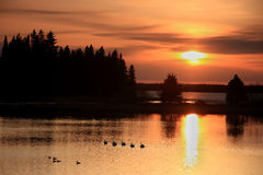 Ducks at Sunset Stock Image