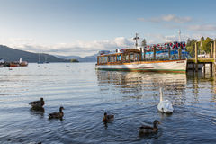 Ducks and Swan in Lake WIndrmere with Cruise boat at the back Royalty Free Stock Image