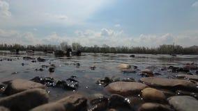 Ducks swim near stock footage