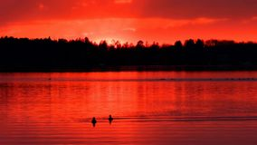 Ducks Swim in a Beautiful Lake at Sunset in Bemidji Minnesota. Ducks swimming on beautiful Lake Irving at Sunset in Bemidji Minnesota stock footage